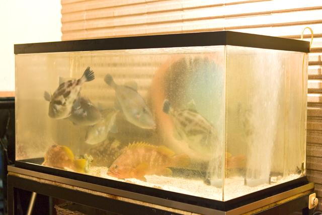 新鮮な活魚が泳ぐ生簀